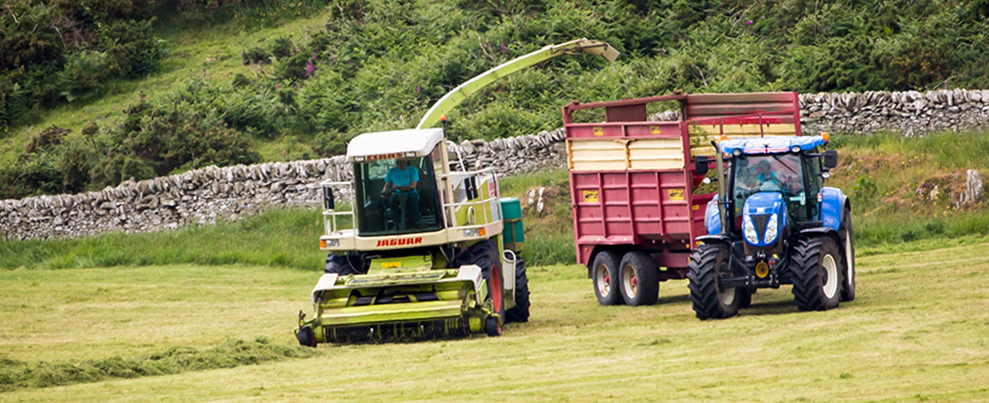 silaging